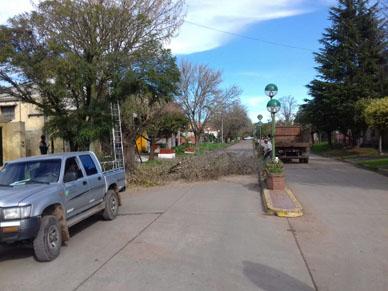 Municipalidad de General Paz: PODA SOBRE LA AVENIDA CAMPOMAR.
