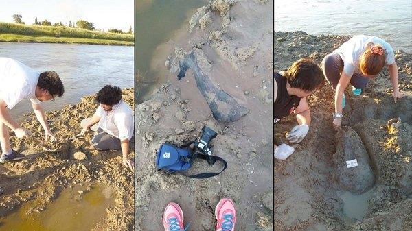 Cuenca del Salado: (Galería) fueron hallados recientemente más de 200 piezas fósiles de animales prehistóricos.